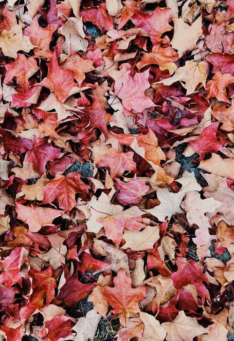 giacomo alessi autunno